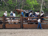 You Have to Love a Rodeo.....
