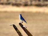 Blue Bird of...... (It's a Test)