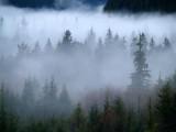 Bogachiel River Fog