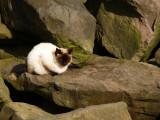 Jetty Cat