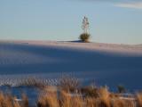 White Sand in Winter Light