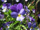 Bildalbum med blommor