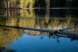 Yosemite-2270