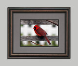 Cardinal Framed 11x14.jpg