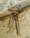 Dragonfly on Exoskeleton