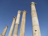 The Cardo Colonnaded Street 7 Jerash Jordan.jpg