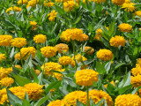 Mushrif Park Flowers