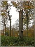 Beisbroek  - Brugge