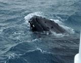 whales 113.jpg