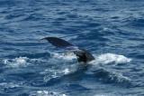 whales 119.jpg