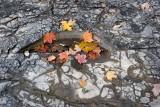Leaves on Shale *.jpg