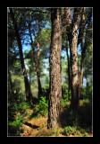 Alpilles - Provence 1