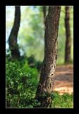 Alpilles - Provence 2