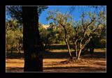 Saint Remy - Provence 2
