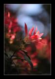 Blooming 2