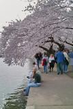 DC & Cherry Blossom Fest 2008 with DP1