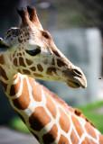 Zoo of Acadiana