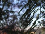 Wierd Plant Close up