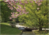 Japanese Garden in blossom-time