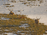 Red Deer stag party
