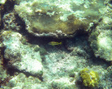 Snorkeling Grand Turk Island