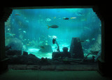 Atlantis Marine World