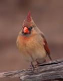 2010 Great Backyard Bird Count