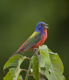 Audubon Slide Show at http://arbirds.org/