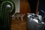 2009-02-12CH S*Wild Turfs Kill Bill . OCI b24