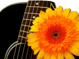 My Takamine guitars