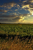 Fields at Norton (2921)