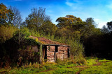 Old shed revisited