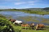 Le paradis - Lac de lascourt
