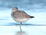 _JFF0661 Red Knot Sleeping Lower Sand Flat.jpg