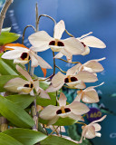 Orchids of the world, unite!