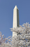 Washington in spring