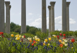 Capitol columns and tulips