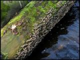 old log.jpg