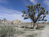 J-Tree 2010 j