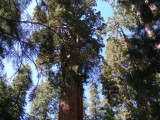 2008-Sequoia-National-Park