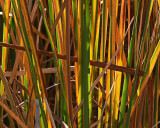 Autumn Reeds Series