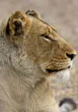 Lion Sands 2007