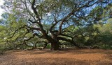Angel Oak, John's Island