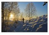 Winter wonderland # 4
