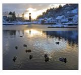 Winter wonderland # 8
