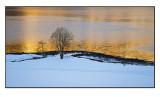 Winter wonderland # 23
