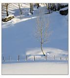 Winter wonderland # 29