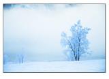 Winter wonderland # 33
