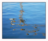 Spring reflections # 4
