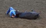 Bull Doggin